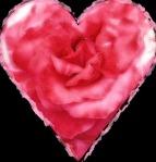AFDheart